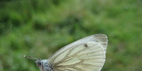 Wild families: Butterflies and moths ERC2511 tickets
