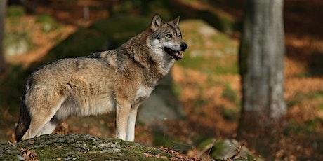 7. Berliner Online-Tierschutzforum: Der Wolf - Rückkehr eines Raubtieres Tickets