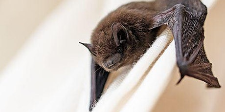 Wildlife Series- Hibernation, Bats, and White-nose Syndrome tickets