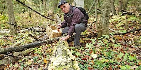 Waverley Workshops Fungi Foray: A mushroom walk with Bob Bowles tickets