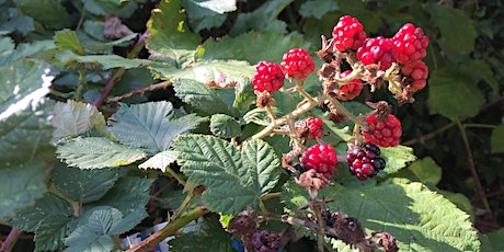 Connect with Nature - Edible St Ann's: fruits and seeds tickets