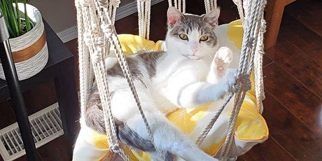Macrame with Cats- Hanging cat bed tickets