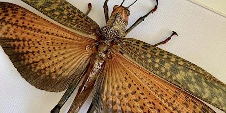 Giant Locust Pinning Workshop tickets