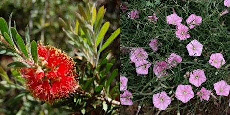 Bush Garden Tour & Propagation Workshop tickets