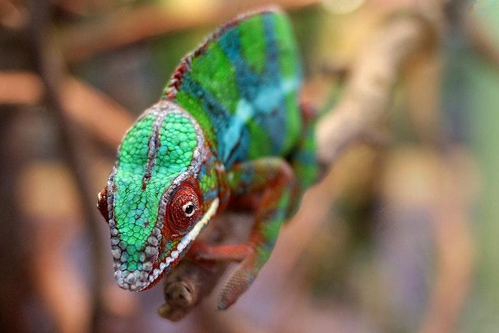 Reptilien- und Makrofotografie im Terra Zoo Rheinberg: Bild
