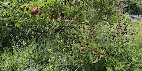 Forest gardening Workshop tickets