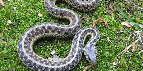 Native Florida Snakes tickets
