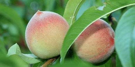 Fruit Trees for Central Florida tickets