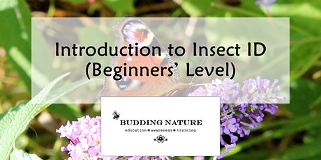 Introduction to Insect ID tickets