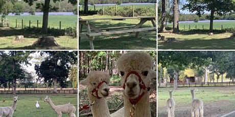 Alpaca Walk and Picnic in the Paddock - Jul-Sep tickets