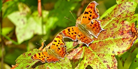 Butterfly Workshop with Elise Larsen tickets