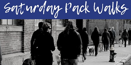 FREE Saturday Pack Walks with Solid K9 Training! Every Saturday in August tickets
