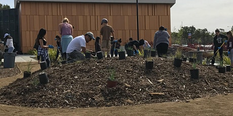 California Native Plant Garden Maintenance: Summer Tasks tickets