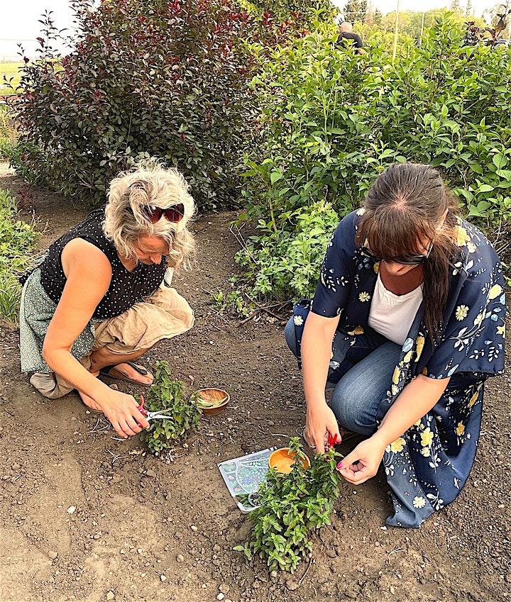 Garden Alchemy image