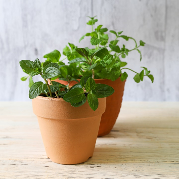 Plant Your Own Herbs! A dementia-friendly activity at Cally Park image