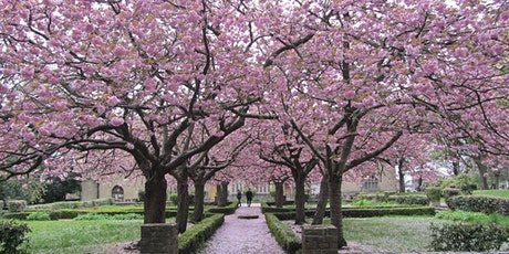 Meet Me Under The Blossom Tree tickets