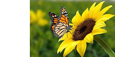 Cyfrifiad Mawr y Pili Pala - The Big Butterfly Count tickets