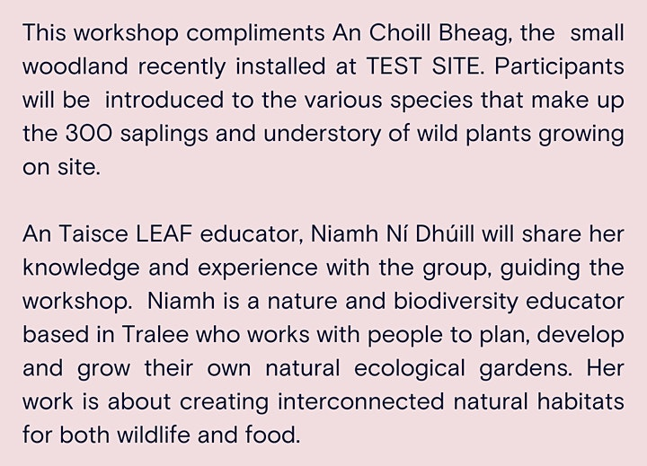An Choill Bheag - Discover native trees and plants with Niamh Ní Dhúill image