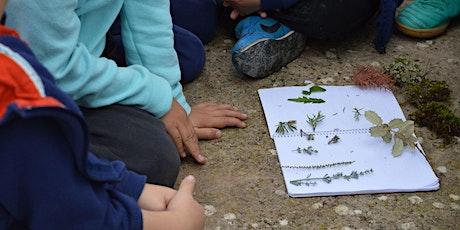 Petit herbari. Identifiquem, collim i premsem les plantes del nostre entorn entradas