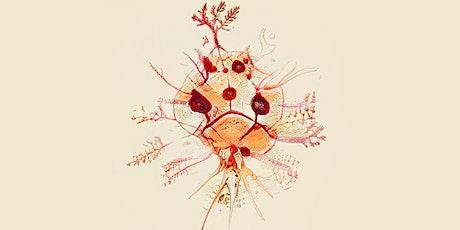 CCCB-Taller Familiar-Bioscopi: Criatures imaginàries. entradas