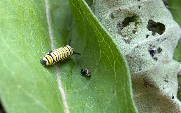Kids' Maker Space: What is Pollination and Who are Pollinators? image