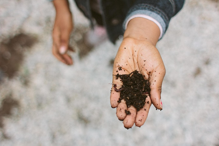 Creating Rich Environments: In the Compost Bin & the Classroom image