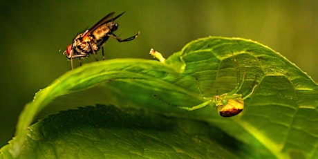 PLANT CARE - Integrated Pest Management tickets