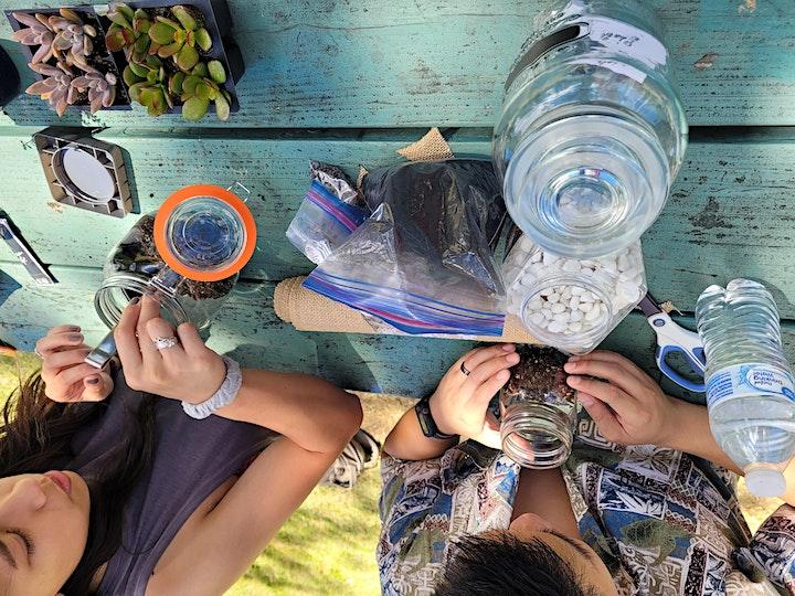 Freeze Hawaii in a Bottle, Terrarium image
