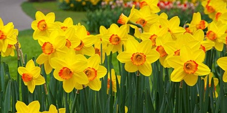 Daffodil and Bonsai Show tickets