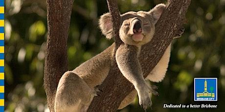 Night adventures: National Threatened Species Day Brisbane Koala Bushlands tickets