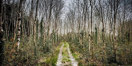 2 hour Forest Bathing Experience - a gentle guided walk through our woods tickets