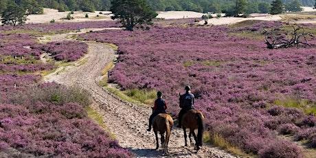 Explore North Brabant - Loonse & Drunense duinen National Park tickets