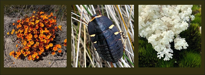 Walpole Wilderness BioBlitz image