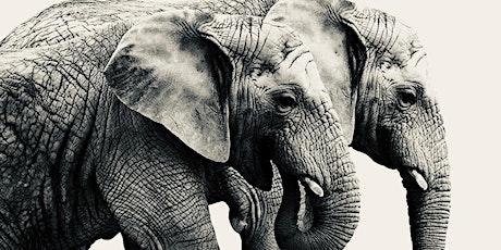 Walking tour - The Elephants Escape tickets