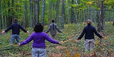 Forest Healing Adventure & Meditation tickets