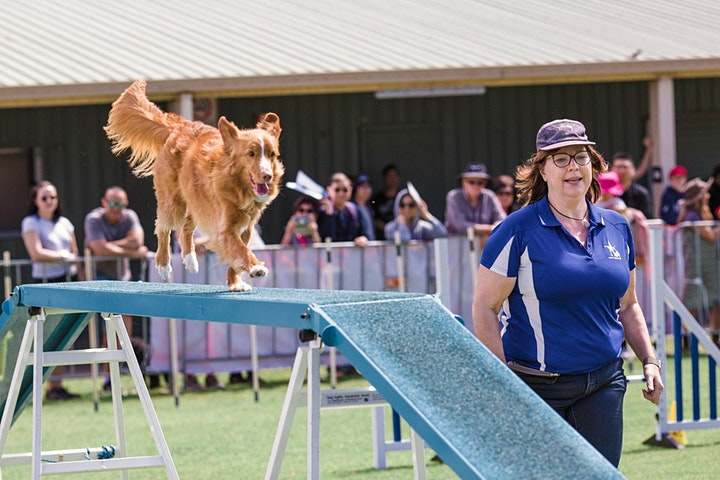 Pawsitive Steps - Mind, Doggy and Spirit Festival image