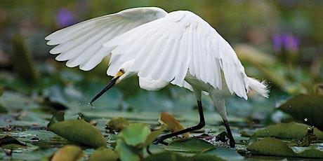 Bird Photography Masterclass with Michael Snedic tickets