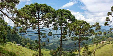 Implementing Verra-certified Reforestation Project in Brazil tickets