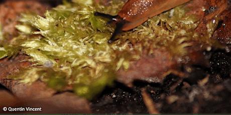 Atelier : sols vivants et biodiversité billets