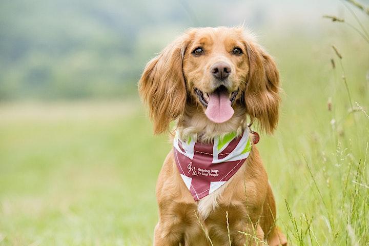 The Great British Dog Walk 2021 - Holyrood Park image