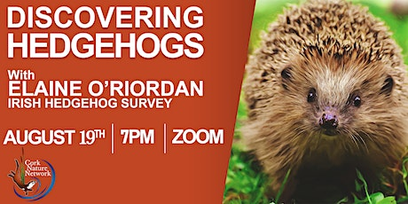 Discovering Hedgehogs tickets