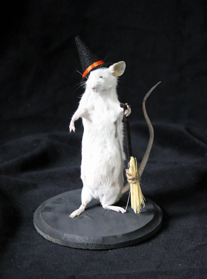Mouse Taxidermy Class image