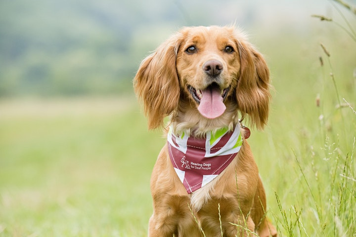 The Great British Dog Walk 2021 - Raby Castle image