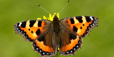 Butterfly and wildflower walk at Coney Hall Recreation Ground tickets