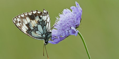 Butterfly hunt and wildflower walk on Leaves  Green Common tickets