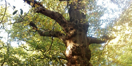 Guided 'Steam Mills Ancient and Veteran Trees Walk',  Forest of Dean tickets