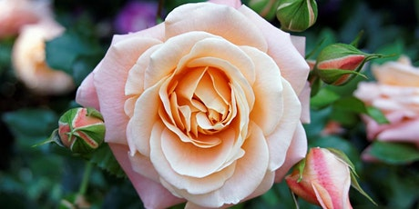 End of Summer Rose Care Talk tickets