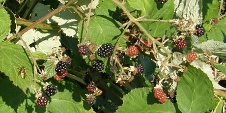 Wild Edible and Medicinal Plants tickets
