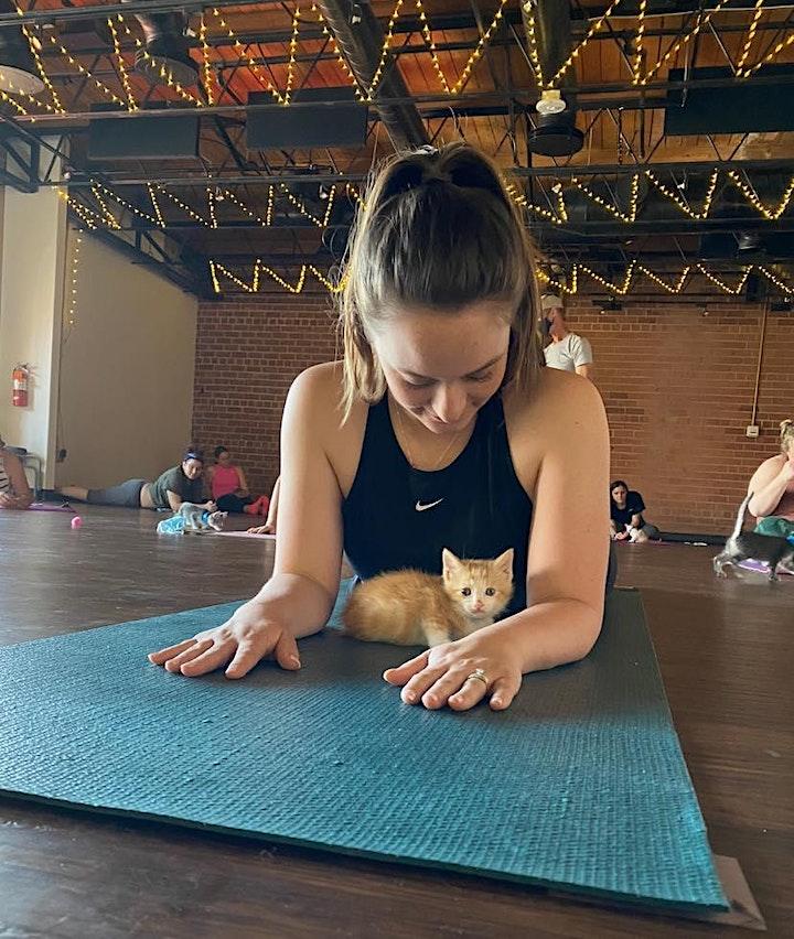 Kitten Yoga Hour image