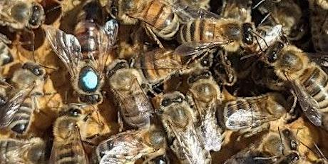 Family Fun Beekeeper Experience tickets